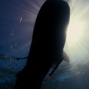 SHEZAD DAWOOD Leviathan – Episode 1: Ben