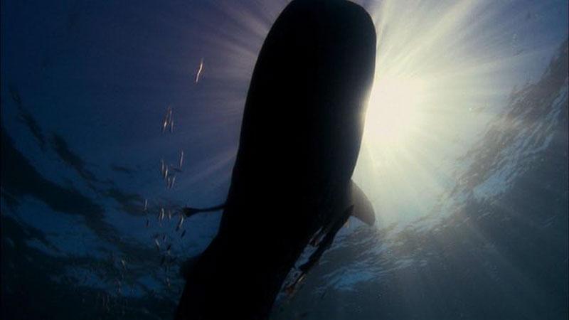 LeviathanBen_still_by-Shezad-Dawood