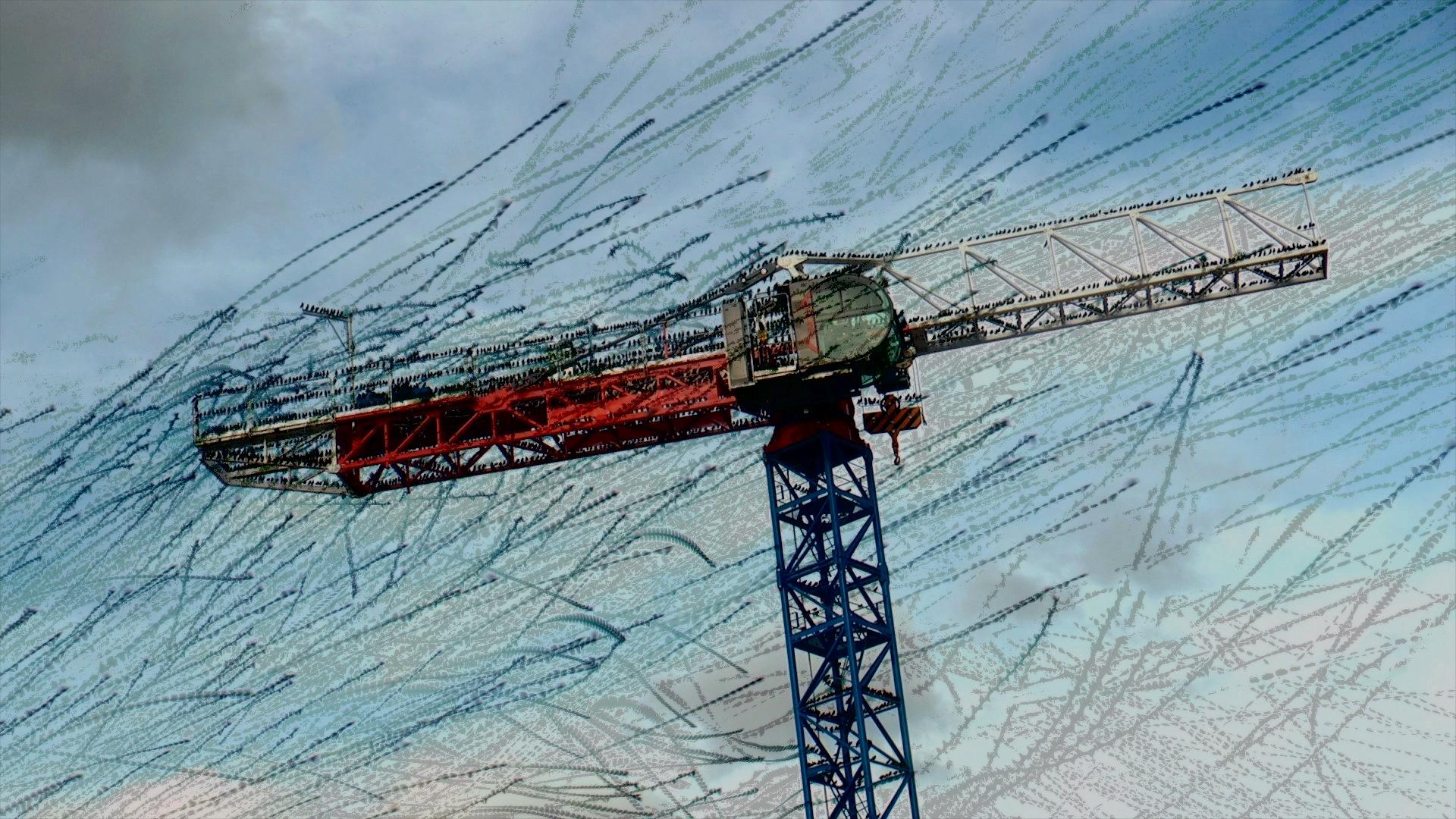 traces-birds1 – Jean-Michel Rolland